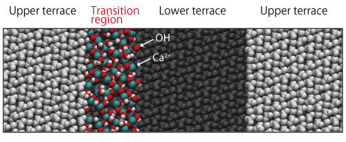 High-Speed FM-AFM and Simulation Reveal Atomistic